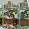 How to Grow a Garden in a Bottle