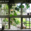 Decor your Window to Welcome Summer
