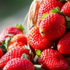 Strawberry is effective for cancer