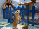 Rabbit in Hong Kong's Restaurant