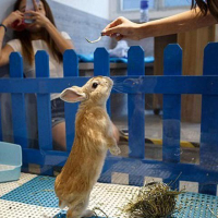 Rabbit in Hong Kong's Restaurant