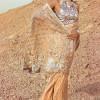Tena Durrani Summer Wedding Formal Dresses 2017