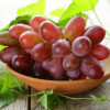 Seeds of Grapes Effective Tools for Safety of Teeth