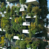 Cities Transform in Vertical Forests