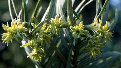 chinese-herb1